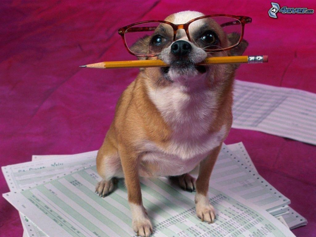 comptable,-le-chien-a-lunettes-135426